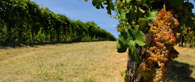 Vini di Romagna – Azienda Campanacci