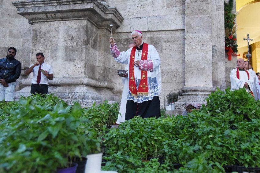 ad Ascoli Piceno il santo del basilico