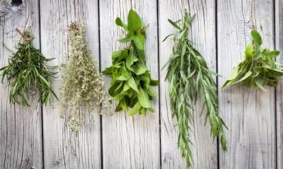 Erbe aromatiche; profumate e benefiche