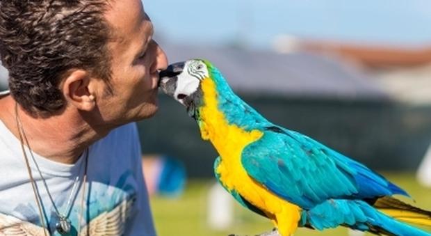 Enzo Salvi, il pappagallo preso a sassate a Ostia e lui aggredito