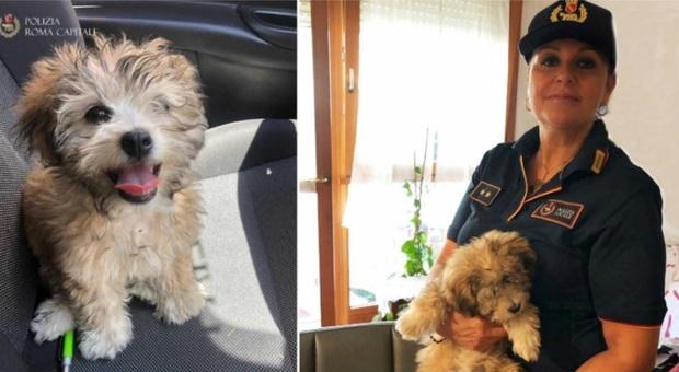 Vigilessa adotta la cagnolina usata per chiedere l'elemosina sotto il sole: «Dovevo salvarla da morte certa»