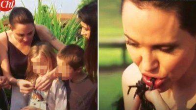 Angelina Jolie mangia gli insetti Brad Pitt s'infuria