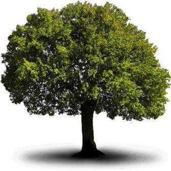 Il significato degli alberi e delle piante