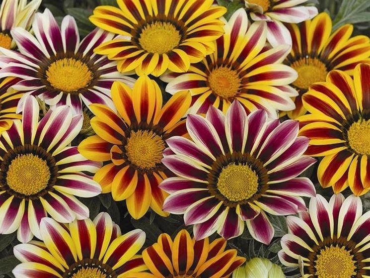 centinaia di fiori....