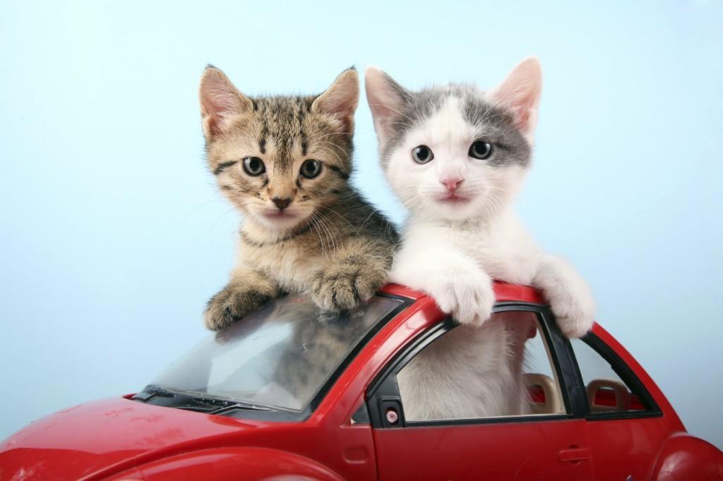 In viaggio con i nostri amici a 4 zampe, la guida al trasporto