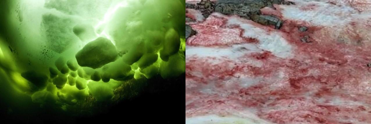 Ghiaccio verde al Polo sud, ghiaccio rosso sulle Alpi. Cosa sta succedendo?