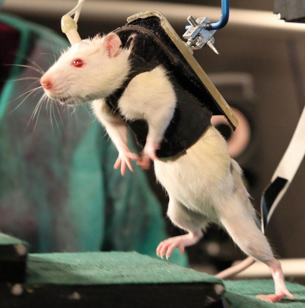 sperimentare sugli animali non ci salverà la vita.