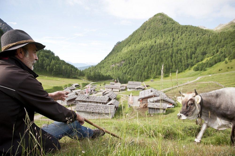 Sentiero del Latte nell'area vacanze sci & malghe Rio Pusteria in Alto Adige