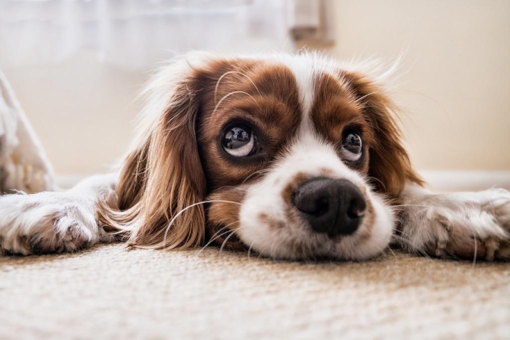 INTERNATIONAL DOG DAY, 5 MOTIVI PER CUI UN CANE MIGLIORA LA QUALITA' DELLA VITA