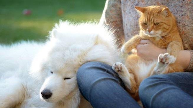 gli unici senza colpa di questa surreale e drammatica epoca che tutti stiamo vivendo, sono proprio i nostri fratelli Animali