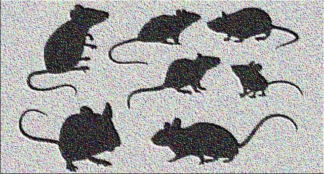 Solo ieri la Moretti (Pd) si inventava la cazzata del bambino morto per un morso di topo nella Roma di Virginia Raggi. Ma sui 4 ricoverati (di cui uno gravissimo) per la malattia dei topi a Vicenza (Sindaco Pd) è silenzio assoluto!