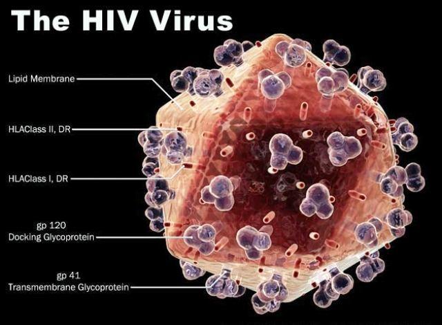 Cura per la HIV pronta? Malattia scompare dal sangue di un inglese