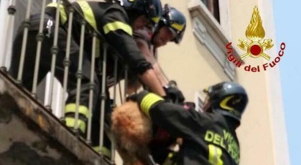 Morto il cane lasciato per due giorni sul balcone a 40° dalla coppia che aveva litigato