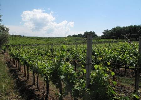 Albana di Romagna vino Docg