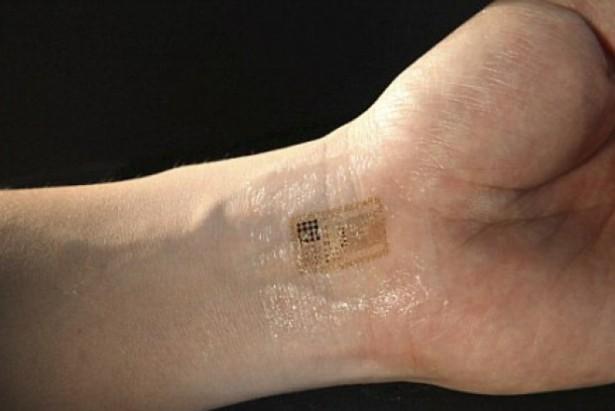 Microchip obbligatorio per tutti anche in Italia