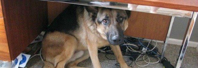 Anche cani e gatti hanno paura del terremoto, ecco come rassicurali.
