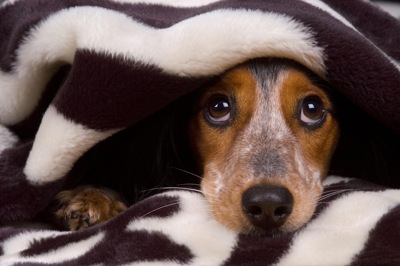 Botti di capodanno, spaventano cani e gatti, consigli