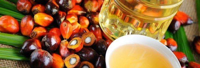 """""""L'olio di palma fa bene"""", uno studio dimostra il contrario"""