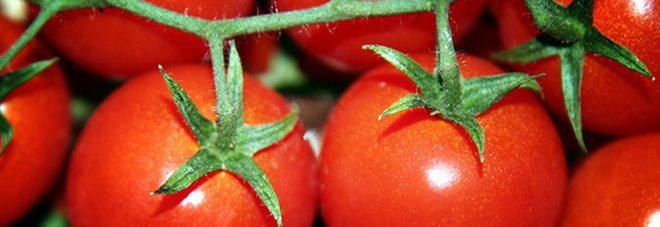 Il pomodoro protegge il cuore, abbassa il colesterolo e aiuta la pressione