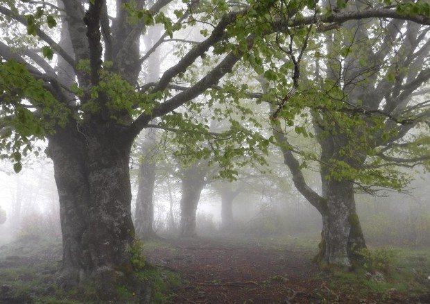 Scegli un albero, gli dai un nome e lo segui on-line, scopri come fare