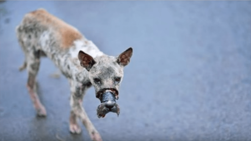 Stragi di cani nel napoletano, è un reato, ma spesso restano impuniti