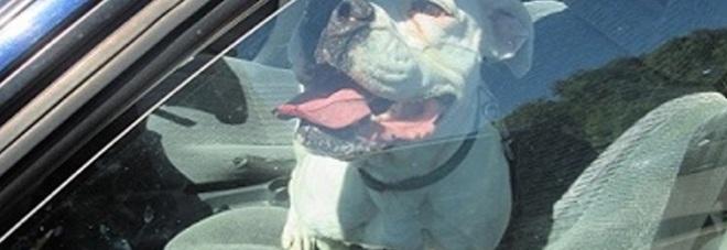 Cane resta chiuso in auto al caldo, sfonda il finestrino per uscire, il proprietario? Il sindaco.