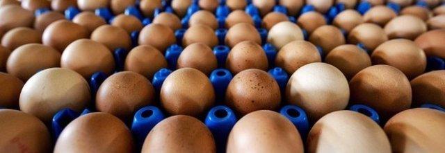 Uova contaminate da antibiotici, trovate confezioni in Polonia e Germania.