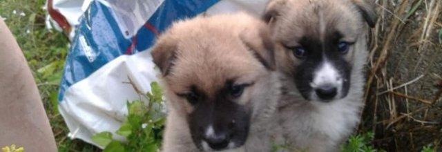 Cuccioli abbandonati in autostrada, appello dei volontari,