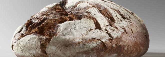 Mangiare pane provoca invecchiamento precoce, emerge da uno studio
