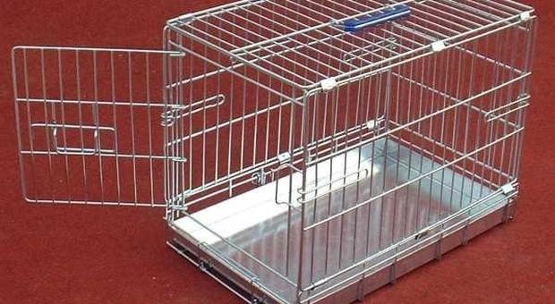 I genitori chiudono il figlio di 5 anni in una gabbia per gatti e lo uccidono con l'acqua bollente: «Non voleva fare il bagnetto»-Leggo. ➥