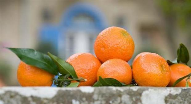 I mandarini fanno ingrassare? Ecco cosa succede davvero al corpo se li mangiamo tutti i giorni-LEGGO ➥