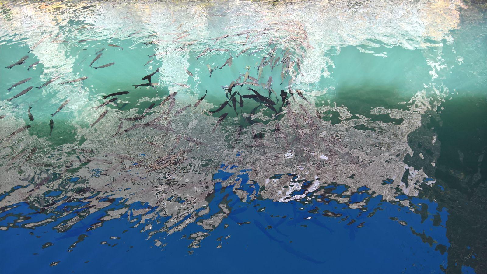 Viaggio a Spalato: Stari Grad e la vasca dei pesci di Petar Hektorović