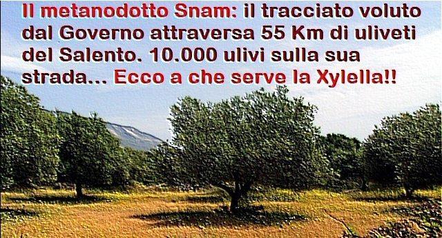 Per rinfrescarVi la memoria - Il metanodotto Snam: il tracciato voluto dal Governo attraversa 55 Km di uliveti del Salento. 10.000 ulivi sulla sua strada… Ecco a che serve la Xylella !!