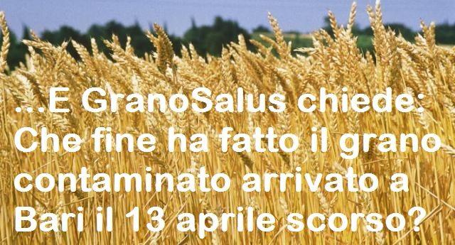 ...E GranoSalus chiede: Che fine ha fatto il grano contaminato arrivato a Bari il 13 aprile scorso?