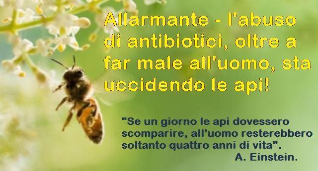 Allarmante - l'abuso di antibiotici, oltre a far male all'uomo, sta uccidendo le api!