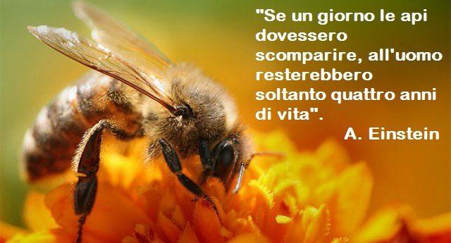 Salviamo le api prima che sia troppo tardi: in alcune parti del mondo sono già scomparse e la gente è costretta ad impollinare le piante da sè...