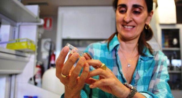 Grandissimo scalpore per la scoperta del Bruco mangiaplastica, ma non dicono che la scopritrice Federica  Bertocchini è senza lavoro per i tagli alla ricerca voluti dall'OCSE: ''Tornerei in Italia, se avessi proposte''...!!