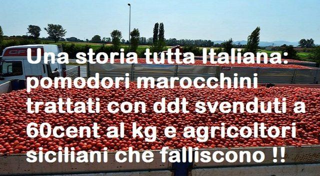 Una storia tutta Italiana: pomodori marocchini trattati con ddt svenduti a 60cent al kg e agricoltori siciliani che falliscono !!