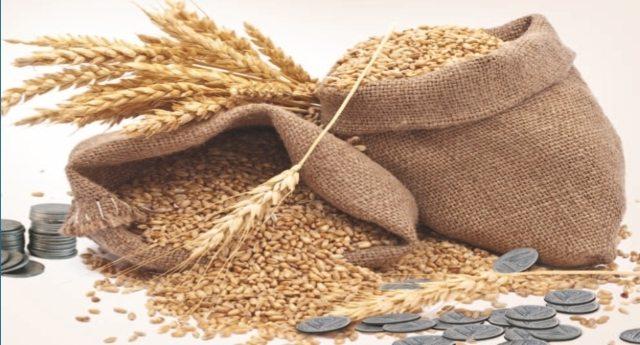 Micotossine? Don? Pesticidi? Glifosato? Monsanto? Ma chi se ne frega: grano duro, a settembre raddoppiano le importazioni! ...E ciaone al buon grano Italiano!
