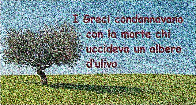 SOLIDARIETÀ AL POPOLO DEGLI ULIVI - Il 6 novembre 46 cittadini salentini saranno processati per aver difeso i loro ulivi.