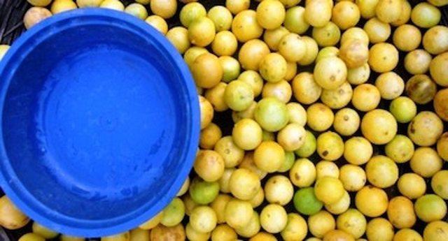 Dal limone la plastica naturale, salutare e senza bisfenolo