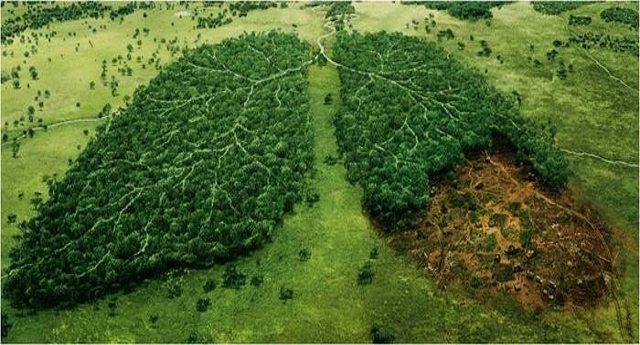 Il pianeta soffoca a causa della deforestazione. Chi sono i principali responsabili? Sempre loro, le Multinazionali! Ecco quali...