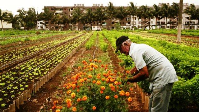 Cuba fra orti urbani e agricoltura biologica: il paradiso delle api, ma soprattutto un esempio per il mondo intero...