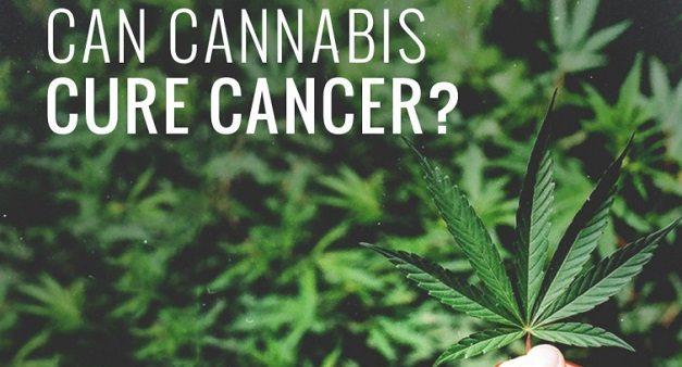 La Cannabis per la cura dei tumori? Una ricerca italiana fa sperare.