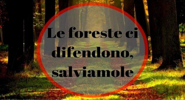 Le foreste ci difendono, salviamole - L'importanza e la bellezza delle foreste.