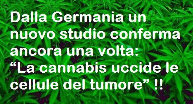 """Dalla Germania un nuovo studio conferma ancora una volta: """"La cannabis uccide le cellule del tumore"""" !!"""