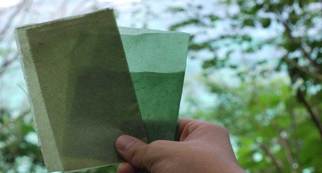 Dall'Indonesia gli imballaggi biodegradabili a base di alghe