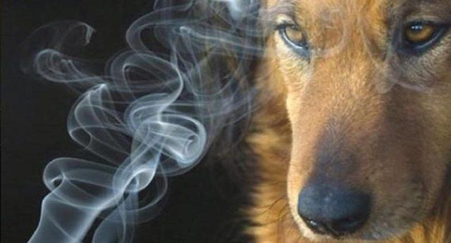 """Anche gli animali possono essere fumatori passivi - La ricerca sul tabagismo: """"I cani e i gatti dei fumatori vivono di meno�"""