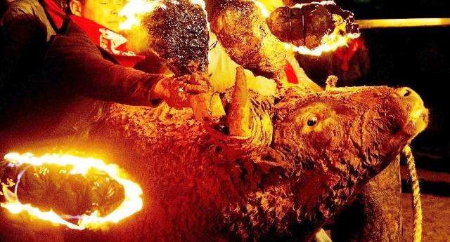 """Il Toro si suicida terrorizzato dal fuoco sulle corna: godetevi la schifosa tradizione del """"toro embolado�, la più disgustosa tra le corride... Io, come uomo e (cosiddetto) essere umano me ne vergogno…!"""