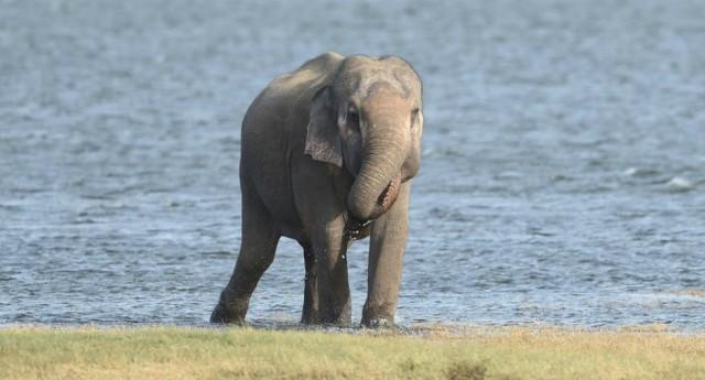 A partire dalla Cina, è boom del traffico di pelle di elefante - La carogna umana è riuscita a trovare il modo più rapido per far estinguere questa stupenda specie...!